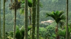 "Coffee Plantation from ""Life True"" I"